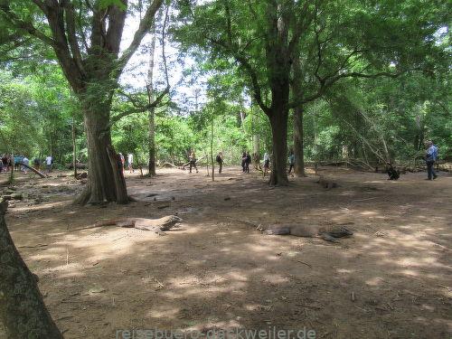 Komodo island indonesien
