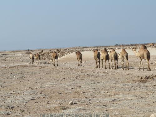 Durch die wüste oman